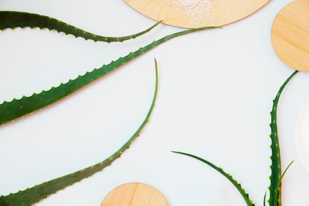 Aloe vera leaves for beauty treatment