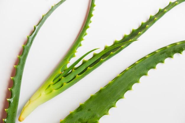 미용 치료를위한 알로에 베라 잎