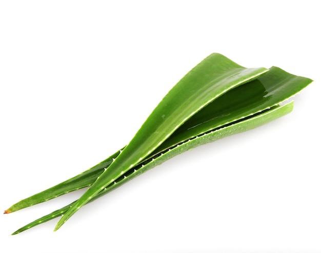 白い背景で隔離のアロエベラの葉