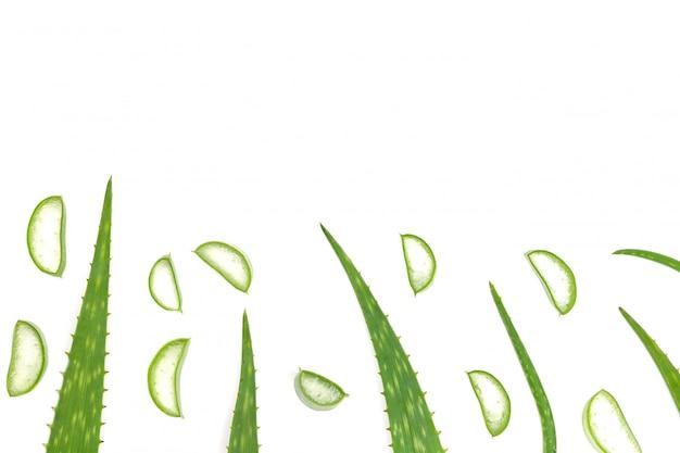 アロエベラの葉に孤立した白い背景とコピースペースがあります。