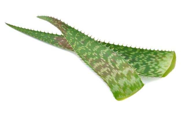 アロエベラの葉は白い背景で隔離
