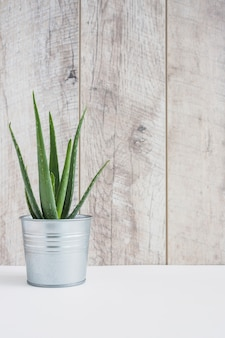 Aloe vera plant in aluminum container on white desk