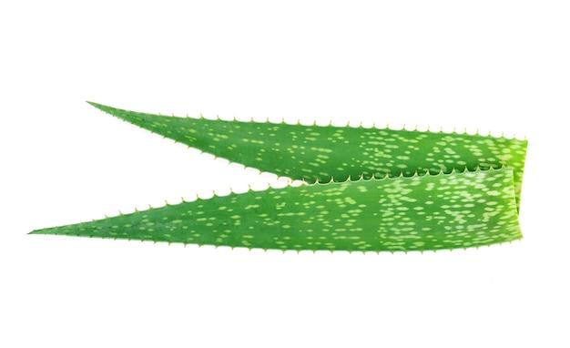 알로에 베라 식물 흰색 배경에 고립입니다.