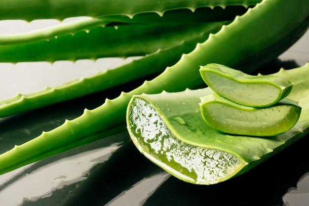Aloe vera plant.