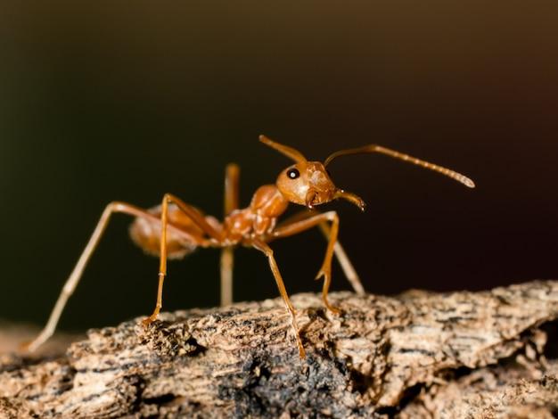 Один муравей гуляет по дереву в природе на темном фоне