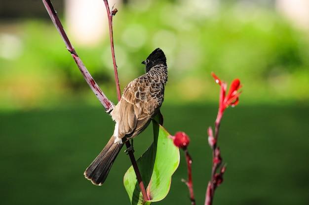 Alone bird sitting on leaves