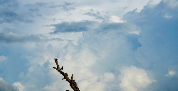Alone bird stand on branch of tree front the blue sky with cloud