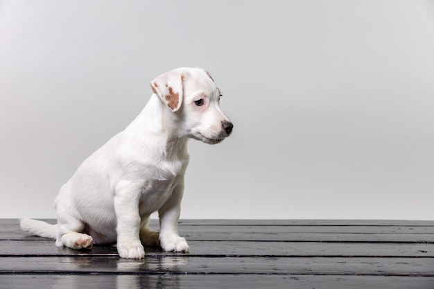 Alone cute pug dog sad and sit on beach chair. copy spase