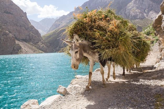タジキスタンのファン山地で一人のロバ Premium写真