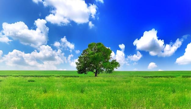 녹색 초원에 혼자 하나의 큰 나무입니다. 파노라마