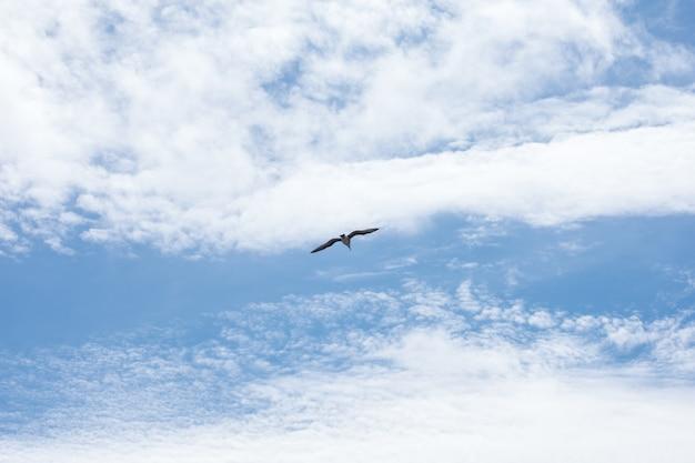 Alone seagull bird flying on cloudy blue sky.