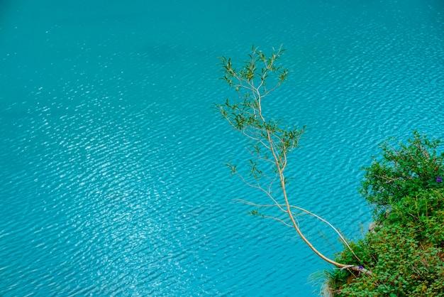Alone tree grow on lakeside above azure mountain lake