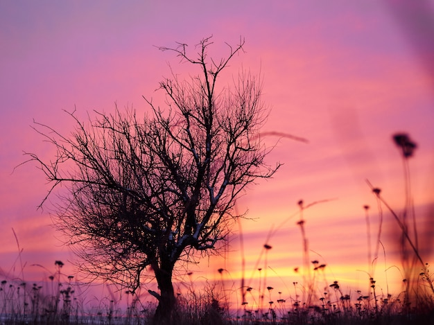 Alone tree in winter coast field in sunset pink, purple sky with rocks and snow
