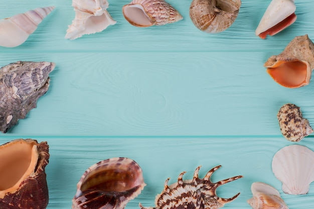 Along the perimeter are different sea shells on turquoise background. different shape sea shells.