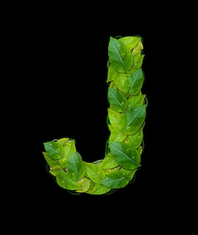 Alphabet letters from leaves