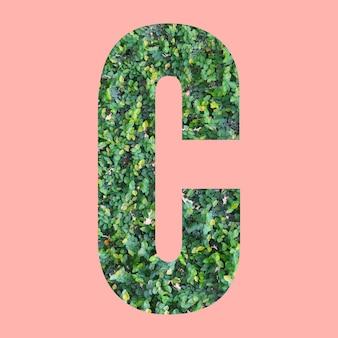 あなたの仕事のデザインのためのパステルピンクの背景に緑の葉のスタイルの形cのアルファベット文字。