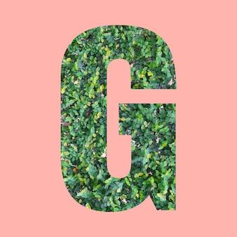 あなたの仕事のデザインのためのパステルピンクの背景に緑の葉のスタイルの形gのアルファベット文字。