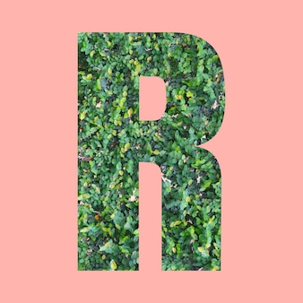 あなたの仕事のデザインのためのパステルピンクの背景に緑の葉のスタイルの形rのアルファベット文字。