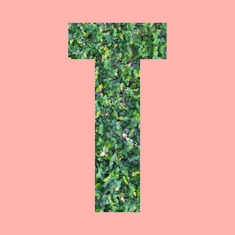 Alphabet letters of shape t in green leaf style on pastel pink background for design in your work.