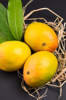 Альфонсо манго или хапус аам - сезонный и сочный фрукт из индии, известный своей сладостью, богатством и ароматом. на красочном фоне. выборочный фокус