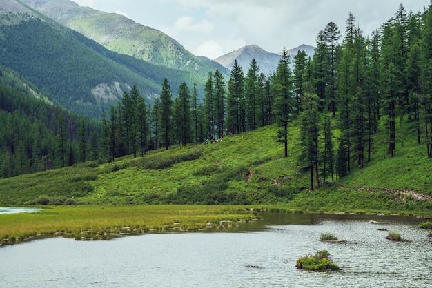Альпийское озеро и хвойный лес в горной долине.