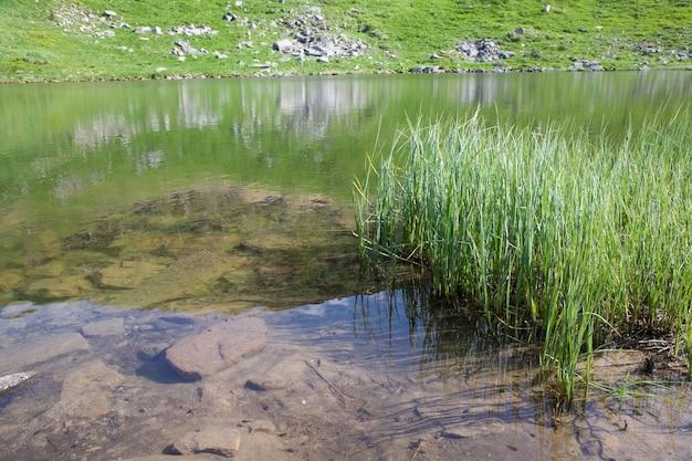 Alpine lake nesamovyte on summer mountain ravine (ukraine, chornogora ridge, carpathian mountains)