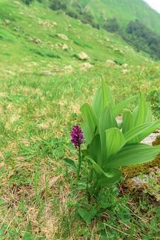 高山の牧草地と花