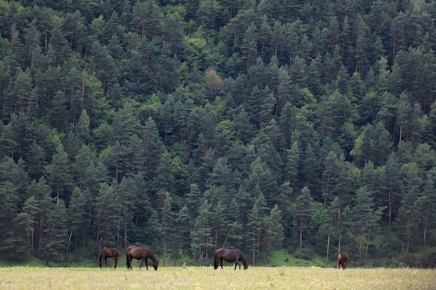 Alpine pasture in the forest for horses.