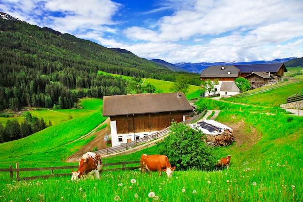 アルプスの風景、緑の草の牧草地と牛(ドロミテ)、イタリア北部
