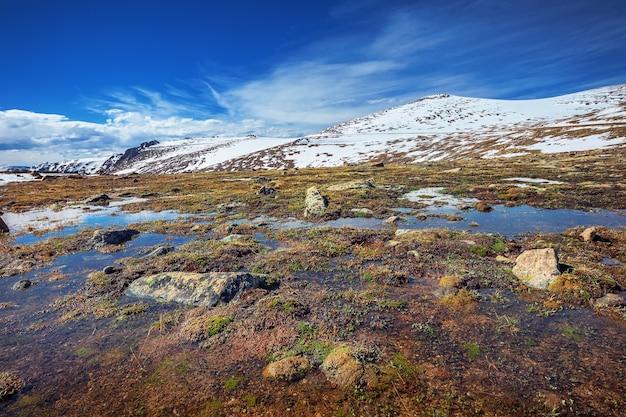 Альпийская тундра рядом с видом на лесной каньон в национальном парке скалистых гор, колорадо, сша