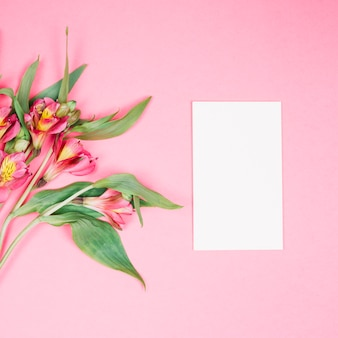 Alstroemeria flower and blank white card on pink background