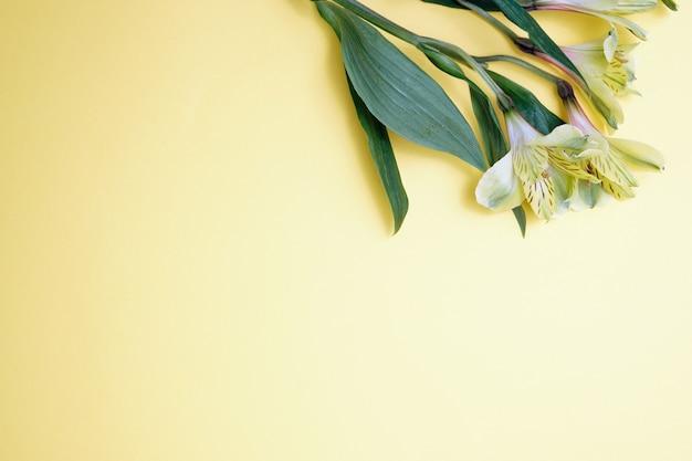 色紙の背景にアルストロメリアの花。テキストの場所