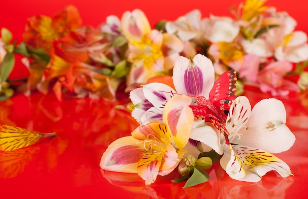 Alstroemeria flowers on a red background