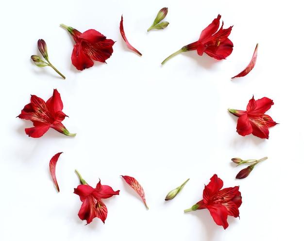 白い背景の上のアルストロメリアの花上面図
