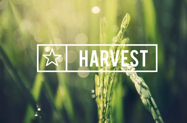 대체 농업 지속 가능한 자연 개념