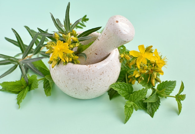 Alternative herbal medicine, concept, fresh healing herbs in mortar.