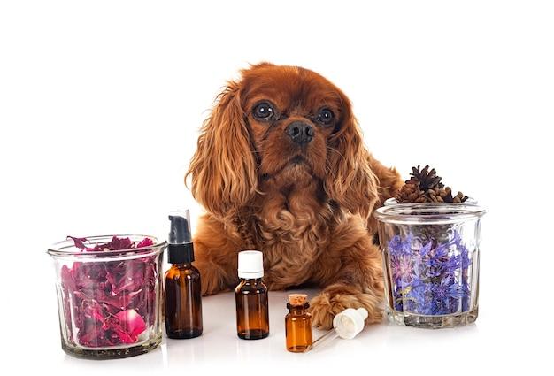 Альтернативная медицина для собаки на белом фоне
