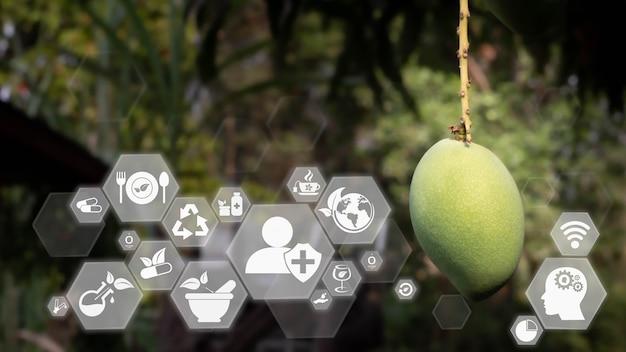 미래의 인공 지능 기술 개념을 가진 대체 의학. 천연 허브 요법. 유기농 의약품, 흐릿한 부드러운 자연 배경의 스마트 가상 화면 인터페이스. 지속 가능한 에너지