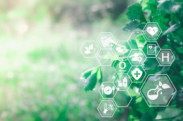 미래의 인공 지능 기술 개념 천연 허브 요법을 사용한 대체 의학