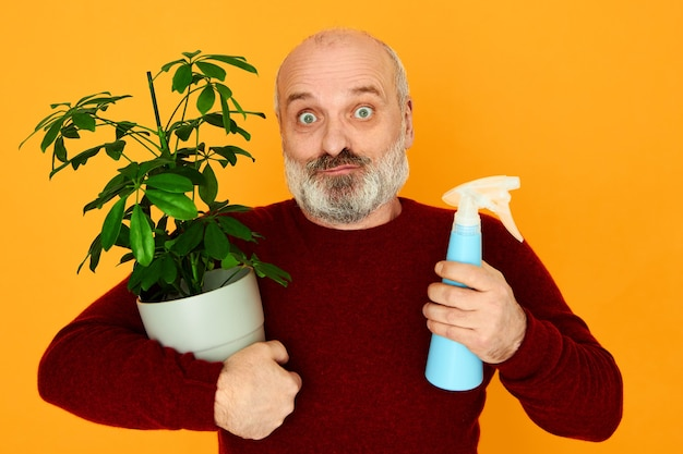 Amazed handsome unshaven male pensioner in knitted sweater posing isolated with flower pot and spray bottle in his hands, cultivating and taking care of decorative houseplants. age and hobby concept