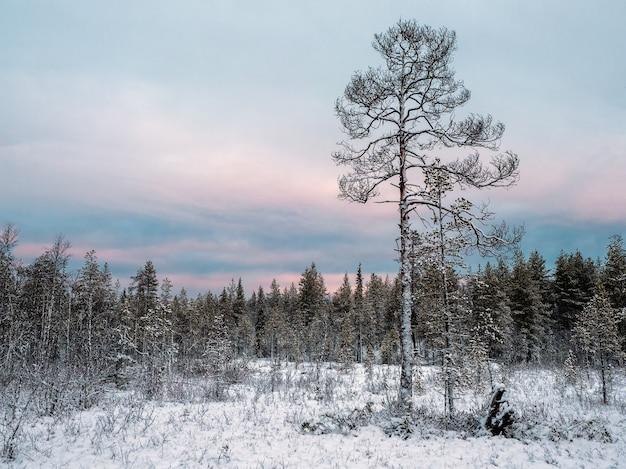 Удивительный арктический пейзаж с деревом в снегу в полярный день.