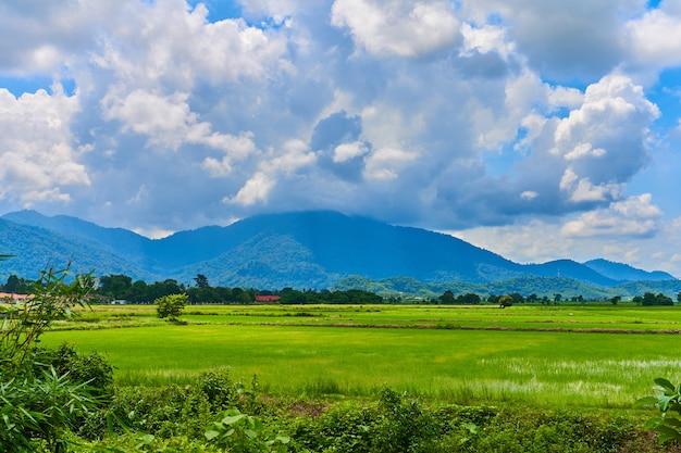 Удивительный азиатский природный ландшафт. огромное зеленое рисовое поле с горами на фоне