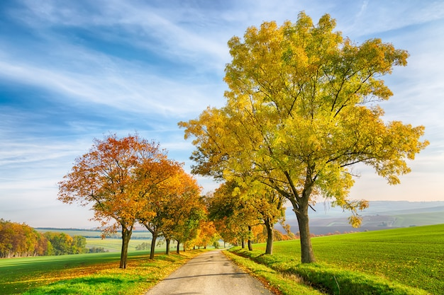 Amazing autumn landscape of country road with colorful trees and blue sky with green grass in south moravia region, czech republic.