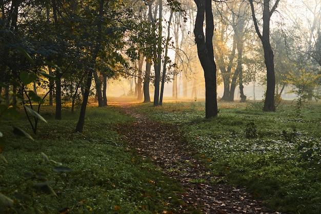 Удивительный осенний пейзаж на туманное утро с красивыми лучами солнца.