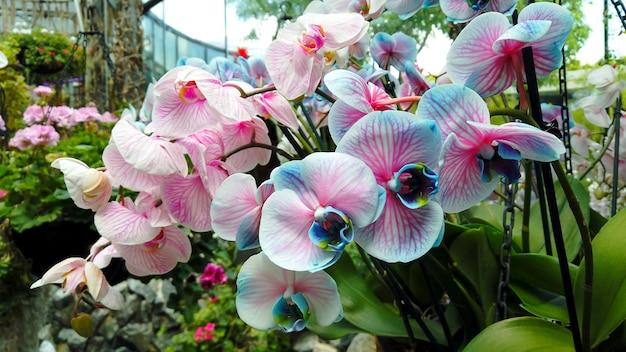 花のオレンジリーと温室の熱帯に咲く青、白、ピンクの蘭の驚くほど美しい大きな束と背景に小川があります。自然の植物相の花束、マクロ。