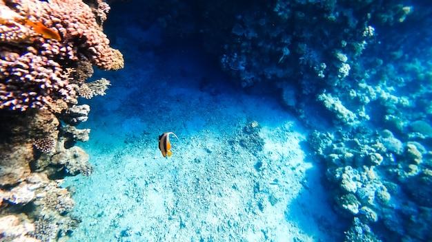 놀라운 아름다움 - 산호가 위치한 홍해의 바닥.