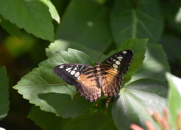 갈색 클리퍼 나비의 놀라운 클로즈업 모습