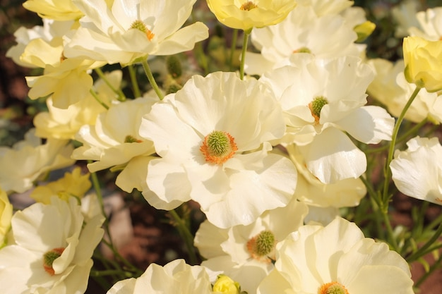 Amazing close-up shot of a beautiful flower