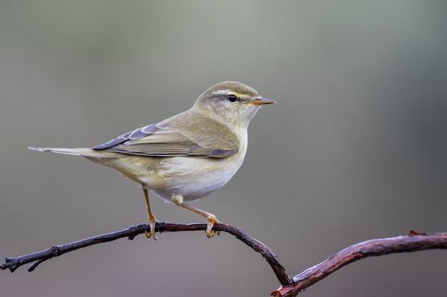 Amazing closeup selective focus shot of a common nightingale