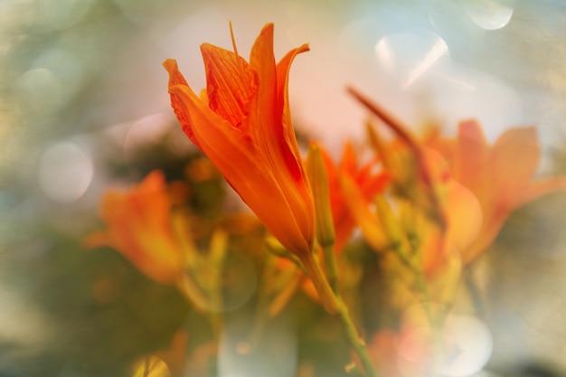 놀라운 화려한 꽃